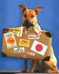 dog_travel
